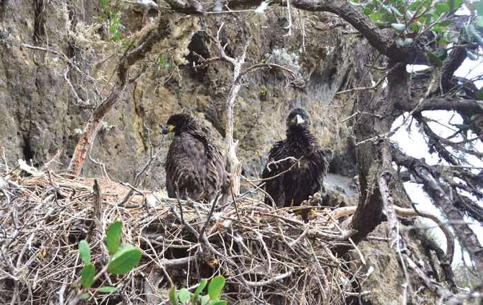 Big Bear Bald Eagle Closure Extended